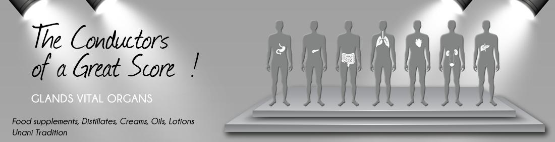 Glands - Vital Organs