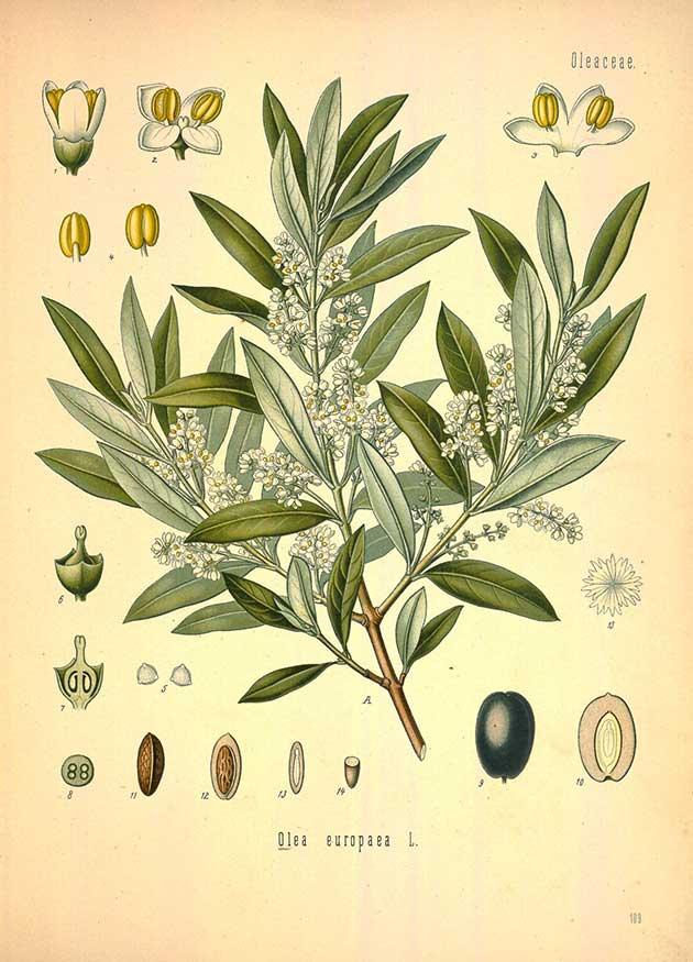 Plant totum